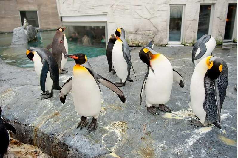 壁纸 动物 企鹅 798_528
